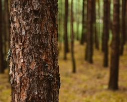 Are you too close to the bark on a tree to see the forest?